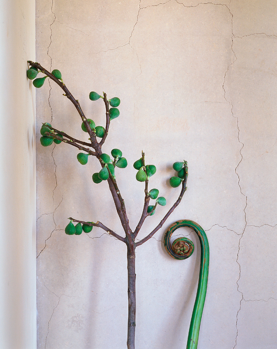 Green branches learning Philip Harvey Photography, San Francisco, California, still life, interiors, lifestyle and product photography