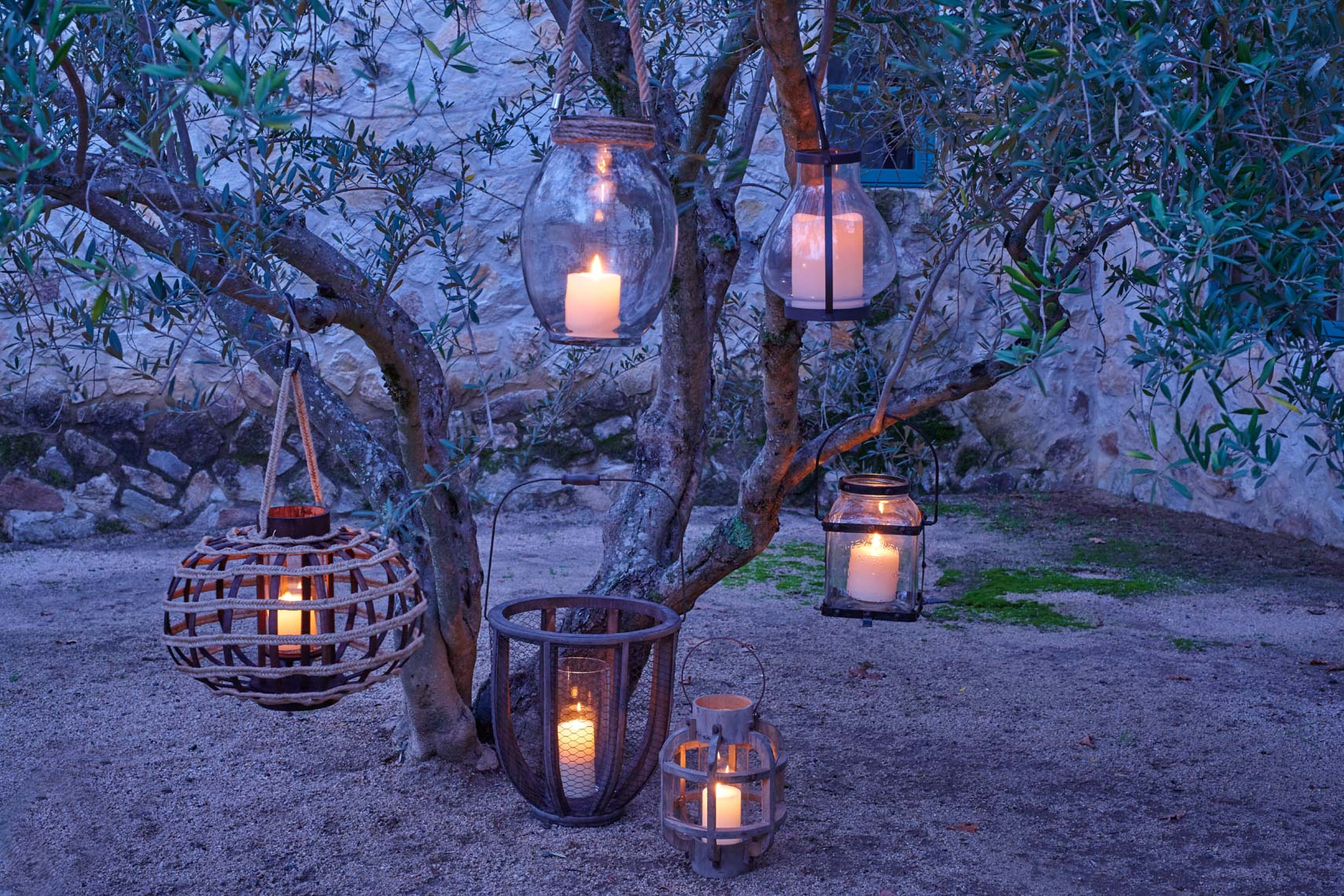 Collections of lit lanterns hanging from olive tree at dusk in Napa