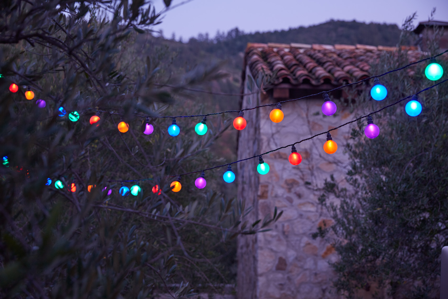 Two colorful light strings with olive trees and stone building at dusk