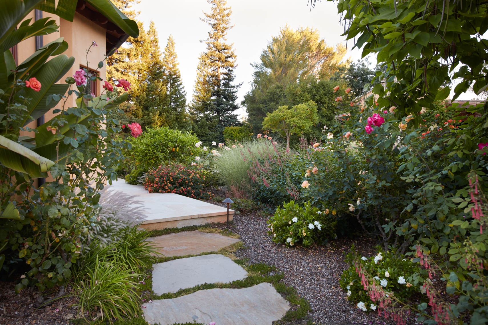 Curving garden path in yard with roses and green plants