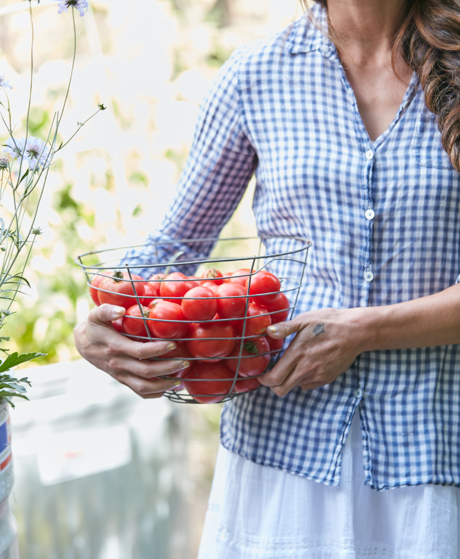 Woman in blue and white shirt carrying a wire basket of red tomatoes in the sunny garden