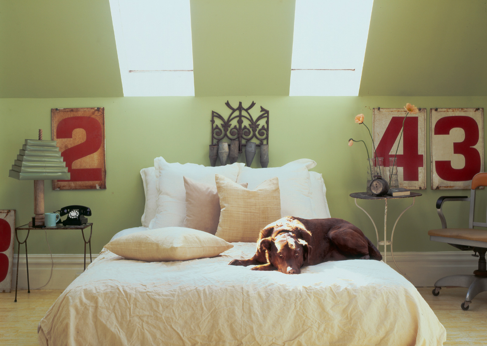 bedroom with brown lab dog sitting on white bedspread with pale green walls