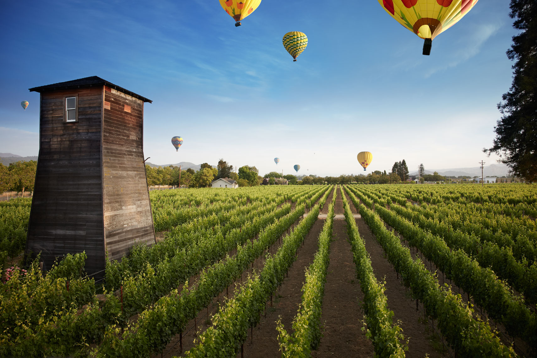 Colorfol hot air balloons hovering over green wine vinyards early morning shot for Senza Hotel and Spa in Napa California San Francisco lifestyle photographer