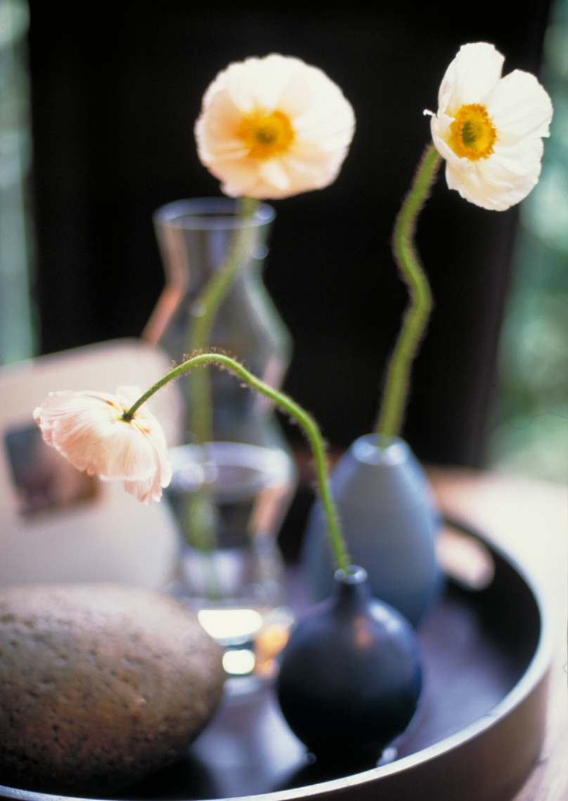 Two flowers in black vases Philip Harvey Photography, San Francisco, California, still life, interiors, lifestyle and product photography