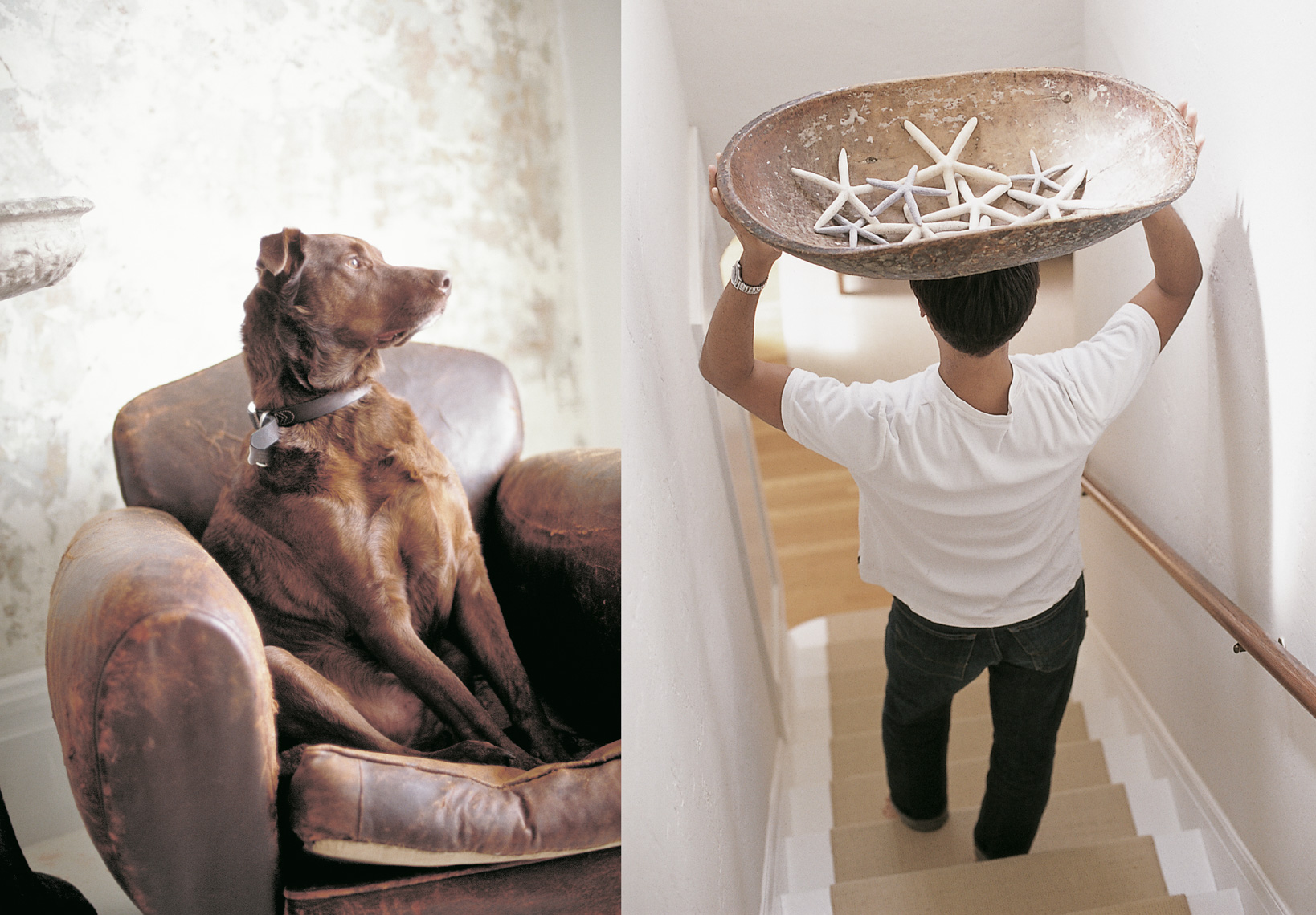 brown Irish Setter dog sitting on brown worn-leather armchair next to man carrying bowl of white starfish down the stairs